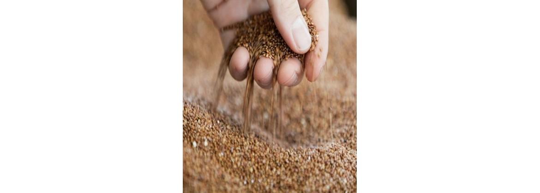 TASA | Tractores de Aguascalientes | Semillas de siembra para cualquier temporada del año
